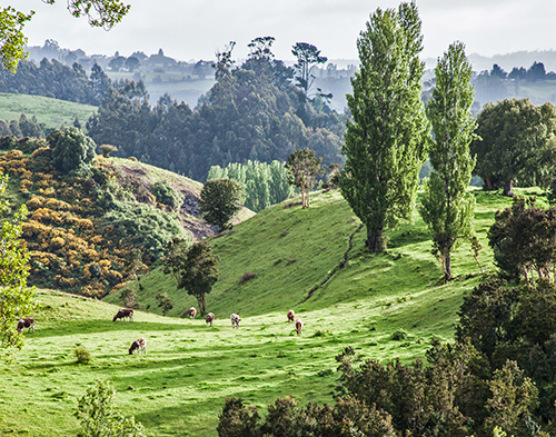 Middle earth in Chiloe, Chile